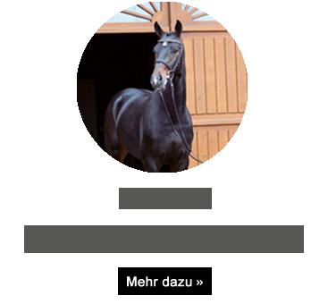 Licotus
