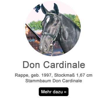 don-cardinale