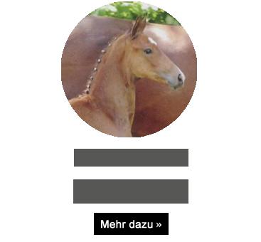 florenco-s