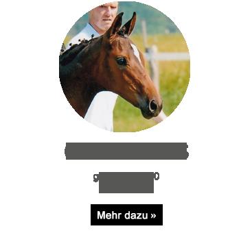 gluecksfee