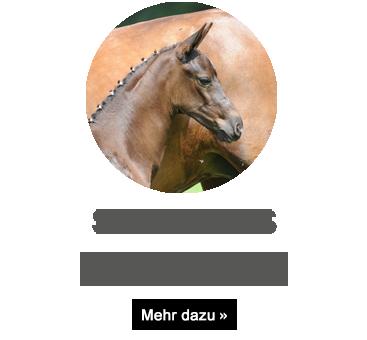 sandriano