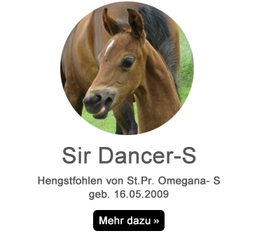 sir-dancer